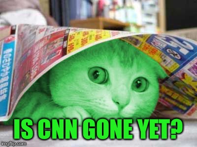 RayCat Scared | IS CNN GONE YET? | image tagged in raycat scared | made w/ Imgflip meme maker