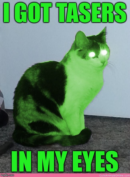 Hypno Raycat | I GOT TASERS IN MY EYES | image tagged in hypno raycat | made w/ Imgflip meme maker