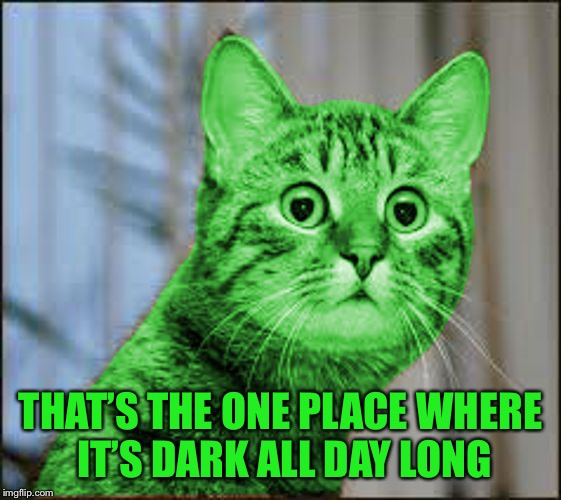 RayCat WTF | THAT'S THE ONE PLACE WHERE IT'S DARK ALL DAY LONG | image tagged in raycat wtf | made w/ Imgflip meme maker