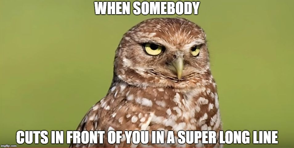 Death Stare Owl | WHEN SOMEBODY CUTS IN FRONT OF YOU IN A SUPER LONG LINE | image tagged in death stare owl,doctordoomsday180,memes,funny,long line,cut | made w/ Imgflip meme maker