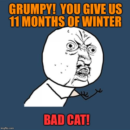 Y U No Meme | GRUMPY!  YOU GIVE US 11 MONTHS OF WINTER BAD CAT! | image tagged in memes,y u no | made w/ Imgflip meme maker