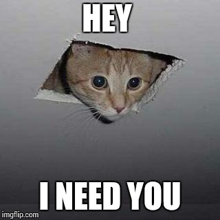 Ceiling Cat Meme | HEY I NEED YOU | image tagged in memes,ceiling cat,kid gif | made w/ Imgflip meme maker