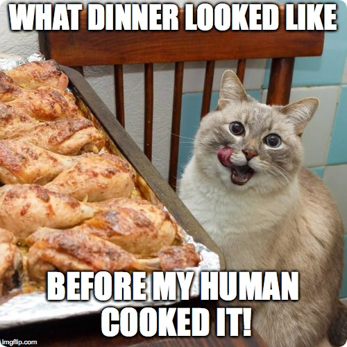 Chicken Lover | WHAT DINNER LOOKED LIKE BEFORE MY HUMAN COOKED IT! | image tagged in chicken lover | made w/ Imgflip meme maker