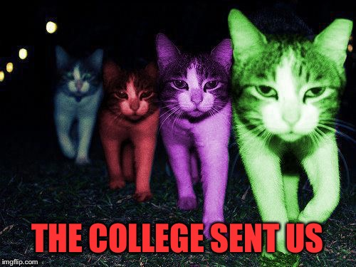 Wrong Neighborhood RayCats | THE COLLEGE SENT US | image tagged in wrong neighborhood raycats | made w/ Imgflip meme maker