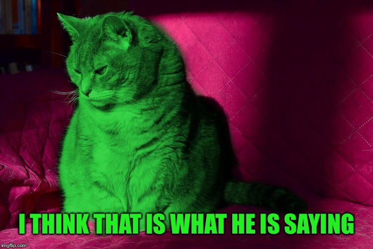 Cantankerous RayCat | I THINK THAT IS WHAT HE IS SAYING | image tagged in cantankerous raycat | made w/ Imgflip meme maker