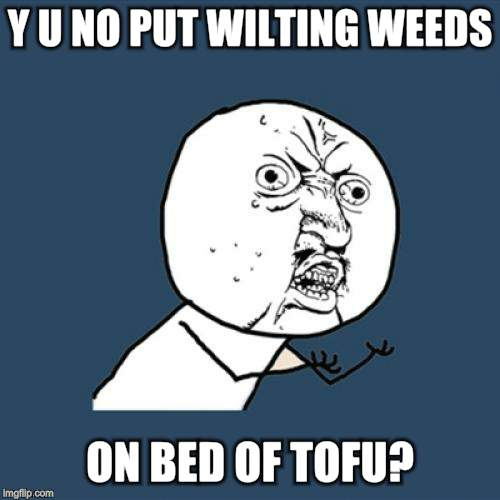 Y U No Meme | Y U NO PUT WILTING WEEDS ON BED OF TOFU? | image tagged in memes,y u no | made w/ Imgflip meme maker