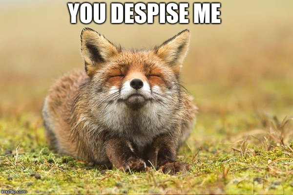 lol | YOU DESPISE ME | image tagged in lol,fox | made w/ Imgflip meme maker