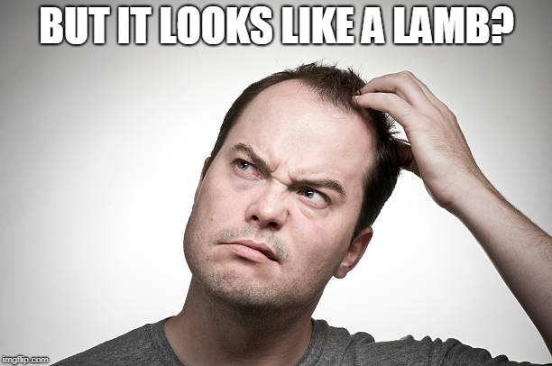 confused | BUT IT LOOKS LIKE A LAMB? | image tagged in confused | made w/ Imgflip meme maker