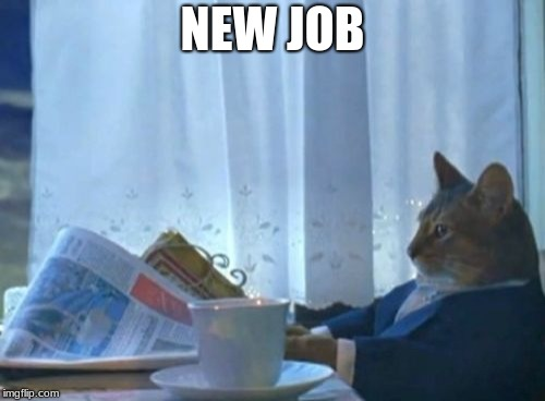 job interview  | NEW JOB | image tagged in memes,i should buy a boat cat | made w/ Imgflip meme maker