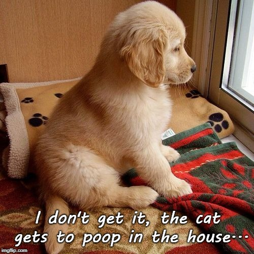 In the dog house... | I don't get it, the cat gets to poop in the house... | image tagged in cat,poop,house,dog,puppy | made w/ Imgflip meme maker