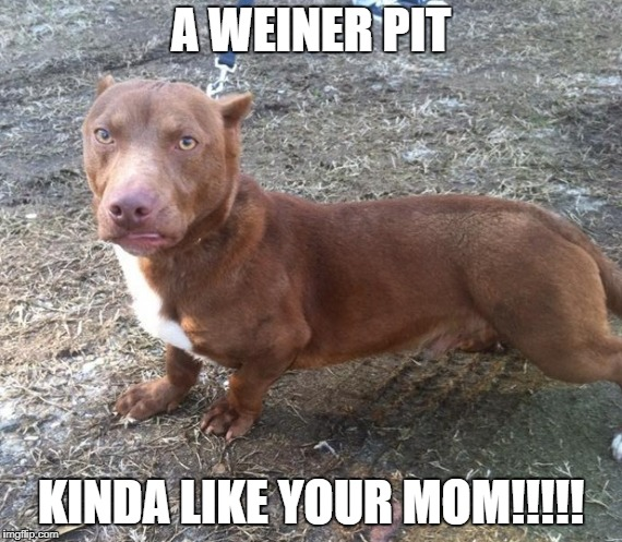 A WEINER PIT KINDA LIKE YOUR MOM!!!!! | image tagged in weiner,lol so funny | made w/ Imgflip meme maker