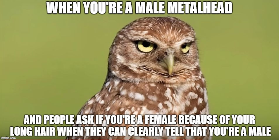 Death Stare Owl | WHEN YOU'RE A MALE METALHEAD AND PEOPLE ASK IF YOU'RE A FEMALE BECAUSE OF YOUR LONG HAIR WHEN THEY CAN CLEARLY TELL THAT YOU'RE A MALE | image tagged in death stare owl,memes,heavy metal,metalhead,long hair,doctordoomsday180 | made w/ Imgflip meme maker
