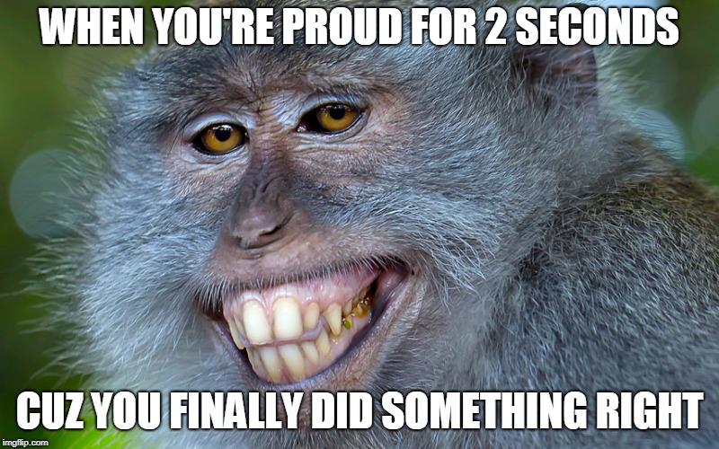 funny animals | WHEN YOU'RE PROUD FOR 2 SECONDS CUZ YOU FINALLY DID SOMETHING RIGHT | image tagged in funny animals | made w/ Imgflip meme maker