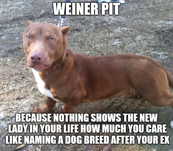 WEINER PIT BECAUSE NOTHING SHOWS THE NEW LADY IN YOUR LIFE HOW MUCH YOU CARE LIKE NAMING A DOG BREED AFTER YOUR EX | image tagged in weiner pit,dogs,funny,national pet day | made w/ Imgflip meme maker