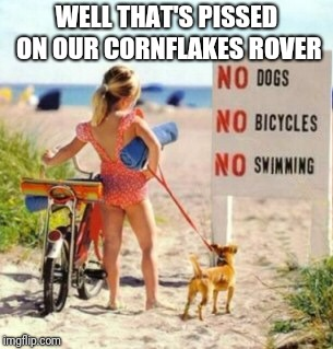 Beach | WELL THAT'S PISSED ON OUR CORNFLAKES ROVER | image tagged in dogs | made w/ Imgflip meme maker