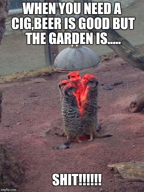 WHEN YOU NEED A CIG,BEER IS GOOD BUT THE GARDEN IS..... SHIT!!!!!! | image tagged in meerkats | made w/ Imgflip meme maker