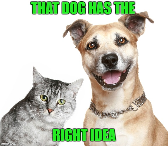 THAT DOG HAS THE RIGHT IDEA | made w/ Imgflip meme maker