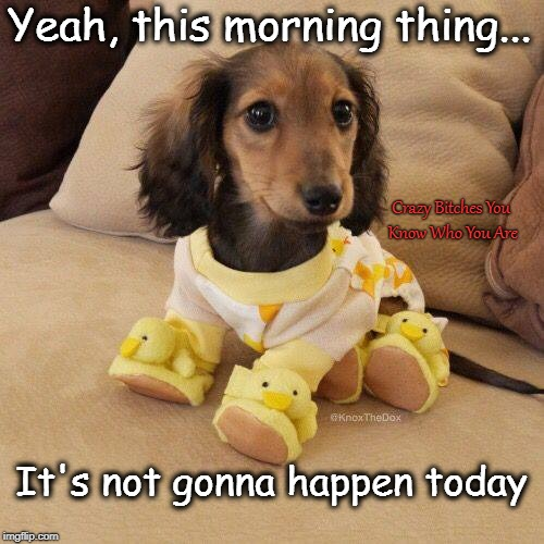 Yeah, this morning thing... Crazy B**ches You Know Who You Are It's not gonna happen today | image tagged in morning,dog | made w/ Imgflip meme maker