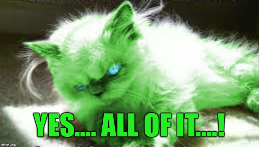 mad raycat | YES.... ALL OF IT....! | image tagged in mad raycat | made w/ Imgflip meme maker