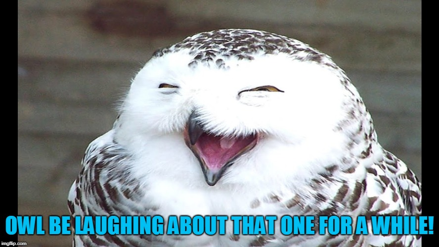 laughing owl | OWL BE LAUGHING ABOUT THAT ONE FOR A WHILE! | image tagged in laughing owl | made w/ Imgflip meme maker