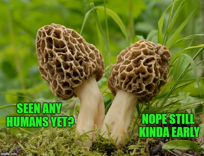 seen any humans yet? | SEEN ANY HUMANS YET? NOPE STILL KINDA EARLY | image tagged in mushrooms | made w/ Imgflip meme maker