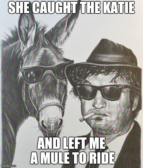 SHE CAUGHT THE KATIE AND LEFT ME A MULE TO RIDE | made w/ Imgflip meme maker