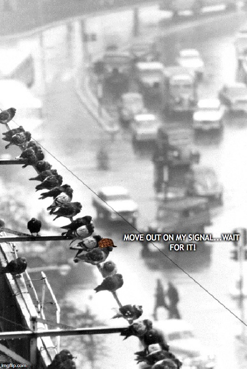 Coordinated Assault On Morning Commuters | MOVE OUT ON MY SIGNAL...WAIT FOR IT! | image tagged in pigeons,crap,cars,people | made w/ Imgflip meme maker