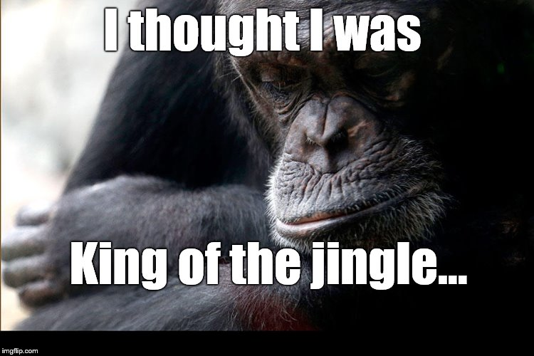 Koko | I thought I was King of the jingle... | image tagged in koko | made w/ Imgflip meme maker