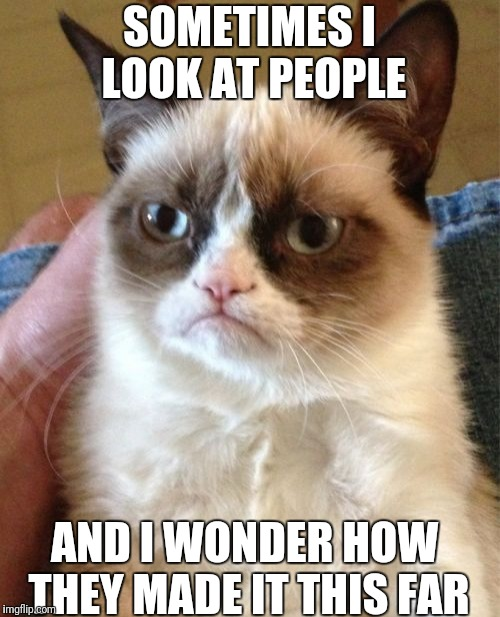 Grumpy Cat Meme | SOMETIMES I LOOK AT PEOPLE AND I WONDER HOW THEY MADE IT THIS FAR | image tagged in memes,grumpy cat | made w/ Imgflip meme maker