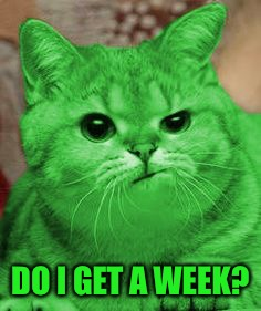 RayCat Annoyed | DO I GET A WEEK? | image tagged in raycat annoyed | made w/ Imgflip meme maker