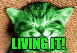 happy RayCat | LIVING IT! | image tagged in happy raycat | made w/ Imgflip meme maker