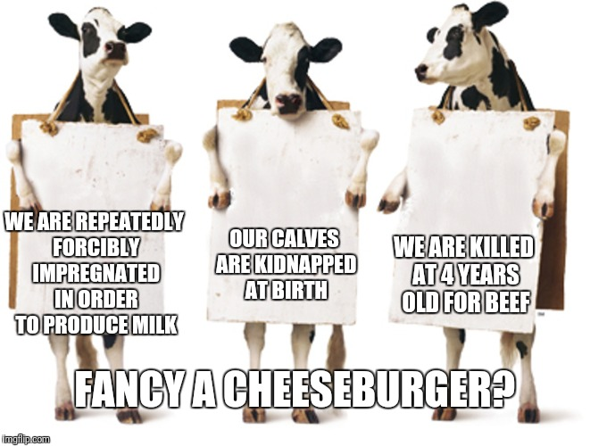 Chick-fil-A 3-cow billboard | WE ARE REPEATEDLY FORCIBLY IMPREGNATED IN ORDER TO PRODUCE MILK WE ARE KILLED AT 4 YEARS OLD FOR BEEF OUR CALVES ARE KIDNAPPED AT BIRTH FANC | image tagged in chick-fil-a 3-cow billboard | made w/ Imgflip meme maker