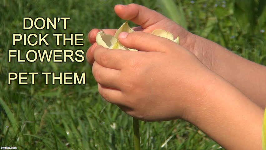 If you like them... But if you Love them... | DON'T PICK THE FLOWERS PET THEM | image tagged in flowers,children,pick,pet,love | made w/ Imgflip meme maker