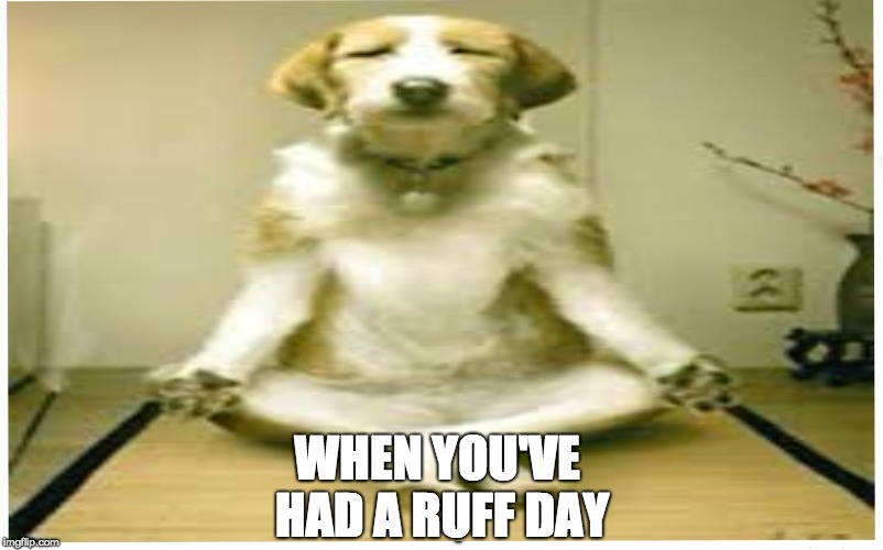 WHEN YOU'VE HAD A RUFF DAY | image tagged in funny memes | made w/ Imgflip meme maker