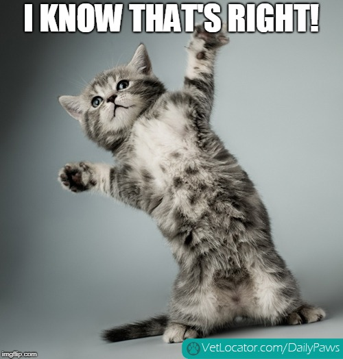 cat dancing | I KNOW THAT'S RIGHT! | image tagged in cat dancing | made w/ Imgflip meme maker
