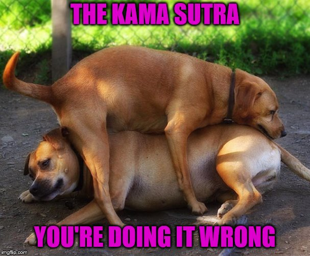 Wrong on every page! | THE KAMA SUTRA YOU'RE DOING IT WRONG | image tagged in memes,dogs,kama sutra,wrong wrong wrong | made w/ Imgflip meme maker