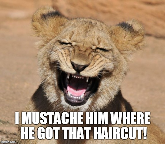lion smiling | I MUSTACHE HIM WHERE HE GOT THAT HAIRCUT! | image tagged in lion smiling | made w/ Imgflip meme maker