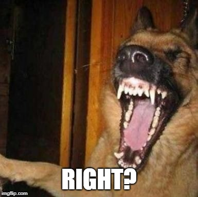 Laughing Dog | RIGHT? | image tagged in laughing dog | made w/ Imgflip meme maker
