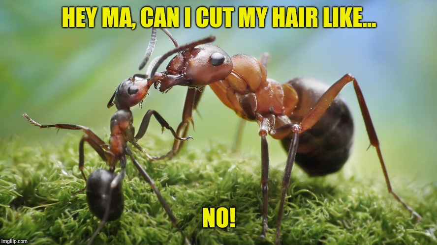 HEY MA, CAN I CUT MY HAIR LIKE... NO! | made w/ Imgflip meme maker