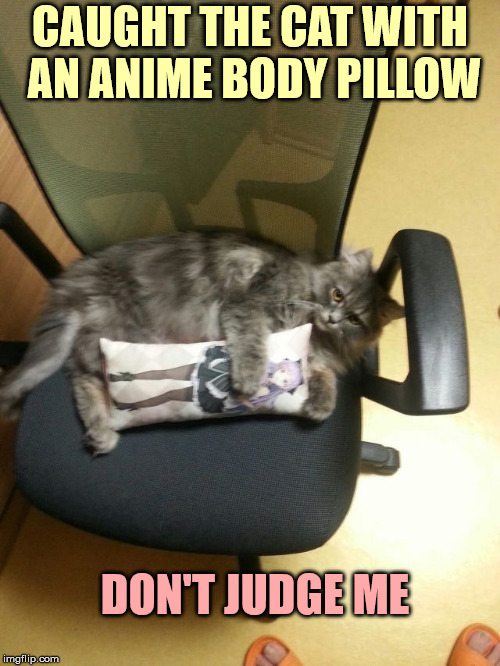 Not sure how he could afford it, I sure can't | CAUGHT THE CAT WITH AN ANIME BODY PILLOW DON'T JUDGE ME | image tagged in anime,cat,body pillow | made w/ Imgflip meme maker
