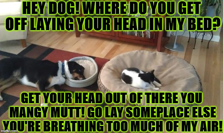 HEY DOG! WHERE DO YOU GET OFF LAYING YOUR HEAD IN MY BED? GET YOUR HEAD OUT OF THERE YOU MANGY MUTT! GO LAY SOMEPLACE ELSE YOU'RE BREATHING  | image tagged in feline prick | made w/ Imgflip meme maker