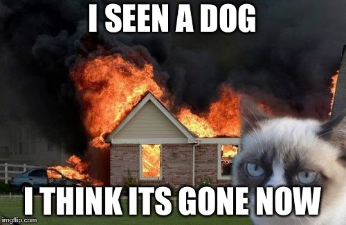 Burn Kitty Meme | I SEEN A DOG I THINK ITS GONE NOW | image tagged in memes,burn kitty,grumpy cat | made w/ Imgflip meme maker