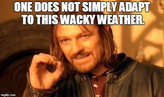 One Does Not Simply Meme | ONE DOES NOT SIMPLY ADAPT TO THIS WACKY WEATHER. | image tagged in memes,one does not simply | made w/ Imgflip meme maker