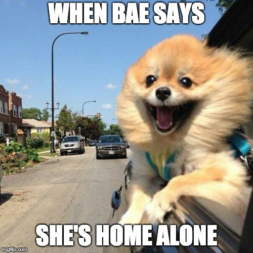 WHEN BAE SAYS SHE'S HOME ALONE | image tagged in smiling pomeranian | made w/ Imgflip meme maker