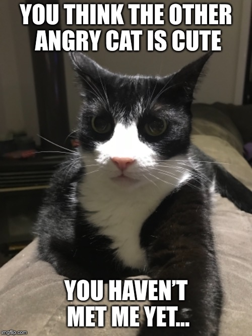 Chuckles the Angry Cat | YOU THINK THE OTHER ANGRY CAT IS CUTE YOU HAVEN'T MET ME YET... | image tagged in angry cat | made w/ Imgflip meme maker