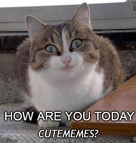 HOW ARE YOU TODAY CUTEMEMES? | made w/ Imgflip meme maker