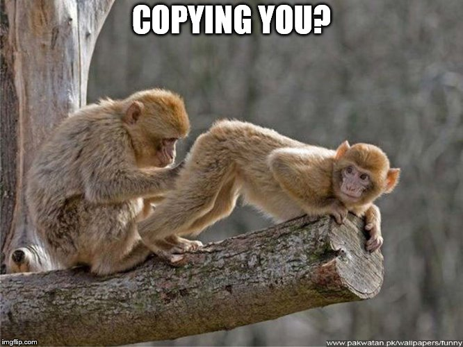 monkey butt | COPYING YOU? | image tagged in monkey butt | made w/ Imgflip meme maker