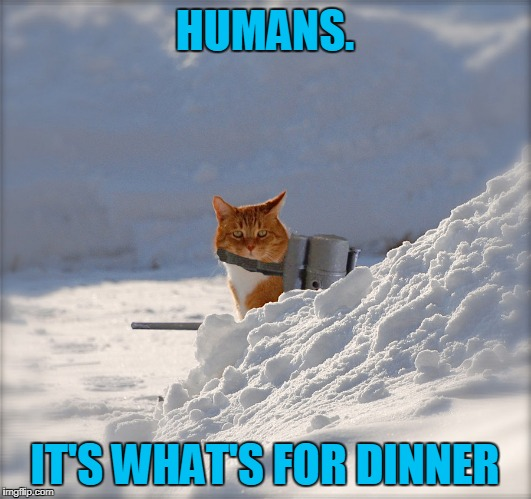 on the hunt and ready to flame like a flip troll | HUMANS. IT'S WHAT'S FOR DINNER | image tagged in flamethrower cat,memes,cat,flamethrower | made w/ Imgflip meme maker