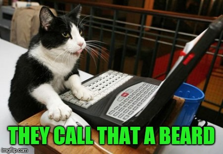 Fact Cat | THEY CALL THAT A BEARD | image tagged in fact cat | made w/ Imgflip meme maker