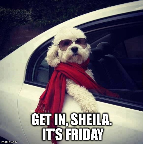 GET IN, SHEILA. IT'S FRIDAY | image tagged in friends | made w/ Imgflip meme maker